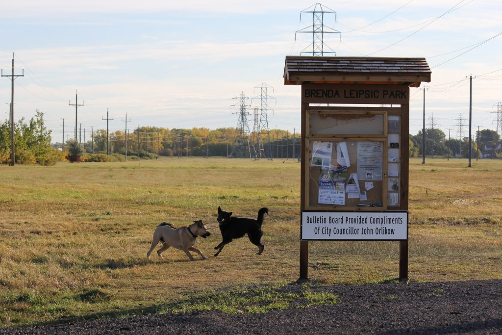 Dogs running around a bulletin board at Brenda Leipsic Park